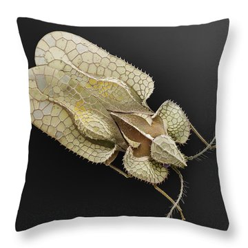 Sycamore Lace Bug Sem Throw Pillow