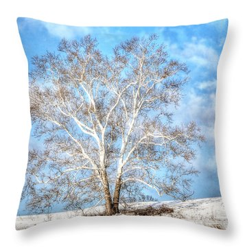 Sycamore Winter Throw Pillow by Jaki Miller