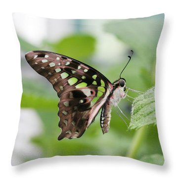Tailed Jay Butterfly #3 Throw Pillow