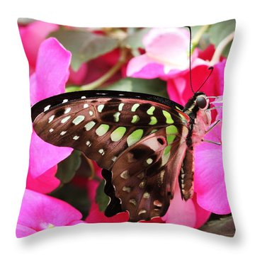 Tailed Jay Butterfly #4 Throw Pillow