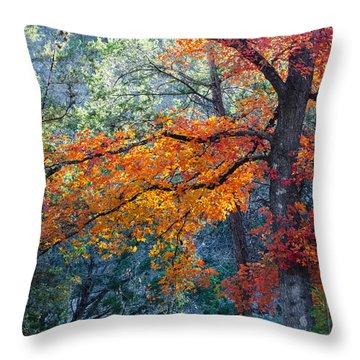 Take A Bough Throw Pillow by Debbie Karnes