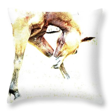 Throw Pillow featuring the photograph Take A Bow by Annie Zeno