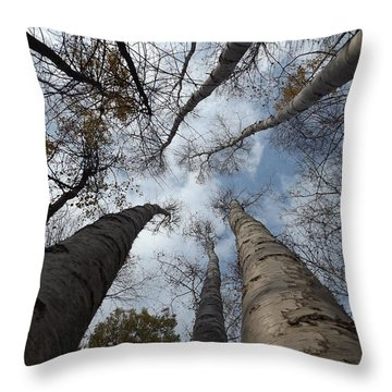 Tall Birch Circle Throw Pillow