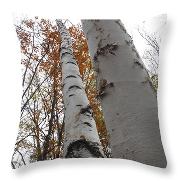 Tall Birch Pair Throw Pillow by Erick Schmidt
