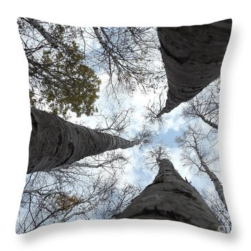 Tall Birches Throw Pillow