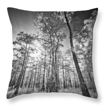 Tall Cypress Trees Throw Pillow