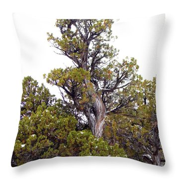 Tall Juniper Tree Iron County Utah Throw Pillow by Deborah Moen