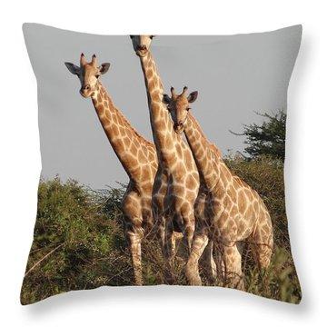 Tall Trio Throw Pillow by Bruce W Krucke