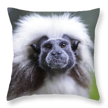 Throw Pillow featuring the photograph Tamarins Face by Shoal Hollingsworth