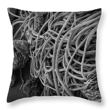 Tangles Of Seaweed 2 Bw Throw Pillow by Chalet Roome-Rigdon