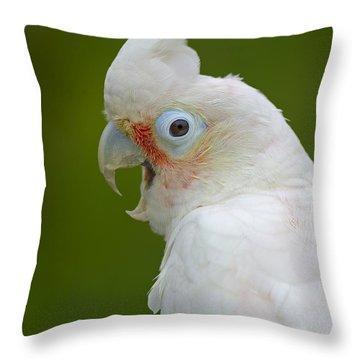 Tanimbar Correla Throw Pillow