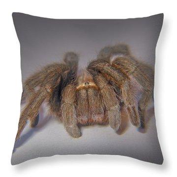 Tarantula Throw Pillow by David and Carol Kelly