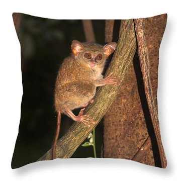 Tarsius Tarsier  Throw Pillow by Sergey Lukashin