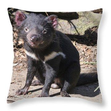 Tasmanian Devil Throw Pillow by Steven Ralser
