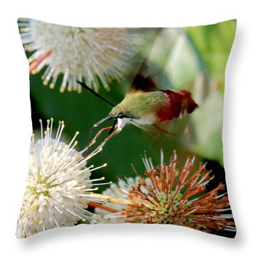 Taste Tester Throw Pillow