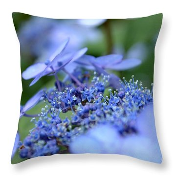 Taube Lacecap Hydrangea Throw Pillow