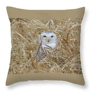 Taylor Snow Throw Pillow by Randy Bodkins
