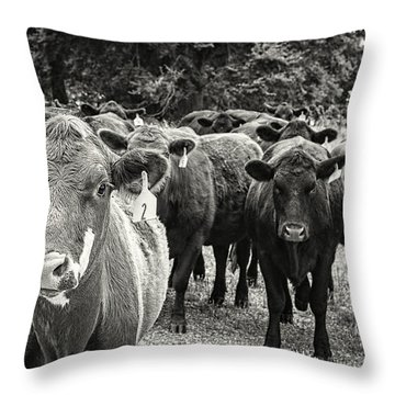 Tennessee Cattle Throw Pillow