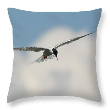Tern In Flight Throw Pillow
