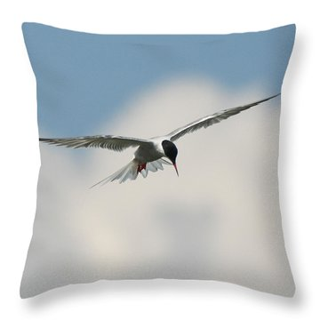Tern In Flight Throw Pillow