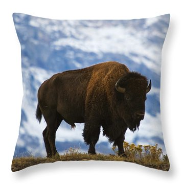 Teton Bison Throw Pillow by Mark Kiver