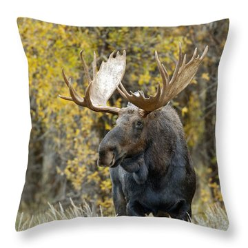 Teton Bull Moose Throw Pillow by Gary Langley