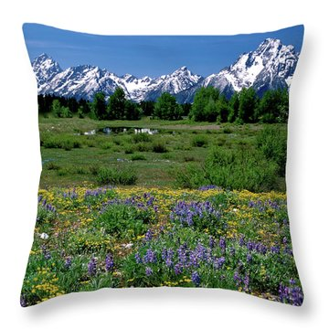 Teton Grandeur Throw Pillow by Ed  Riche