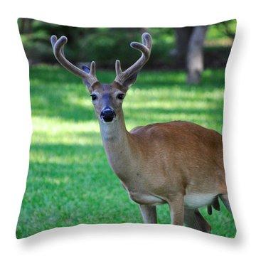 Texas Deer Throw Pillow