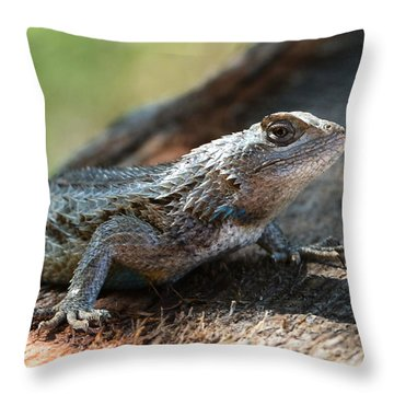 Texas Lizard Throw Pillow