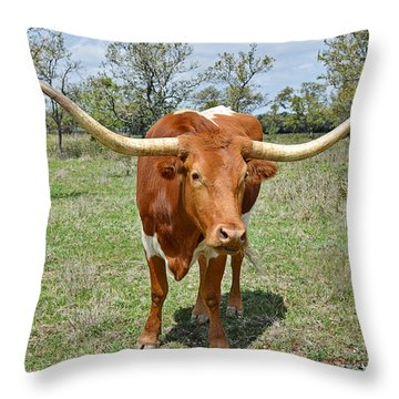 Texas Longhorn Throw Pillow by Christine Till