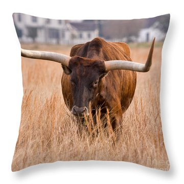 Texas Longhorn Throw Pillow by Louise Heusinkveld