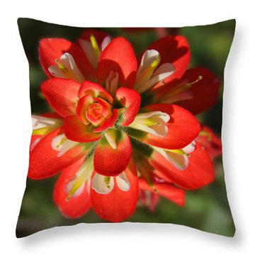 Texas Paintbrush Throw Pillow