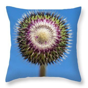 Texas Thistle Bud Throw Pillow
