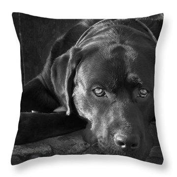 Labrador Throw Pillows