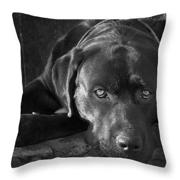 Labrador Retriever Throw Pillows
