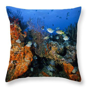 The Active Reef Throw Pillow