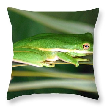 The American Green Tree Frog Throw Pillow by Kim Pate