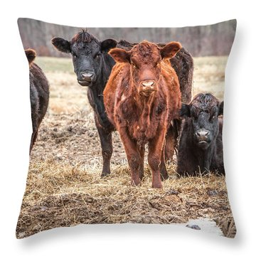 The Angry Cows Throw Pillow by Gary Heller