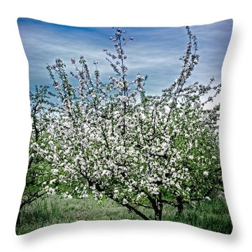 The Apple Tree Blooms Throw Pillow by William Havle