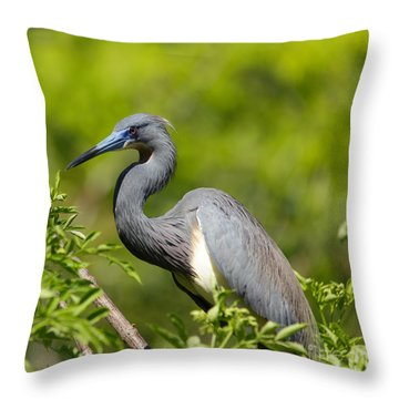 The Art Of Focus Throw Pillow by Mary Lou Chmura