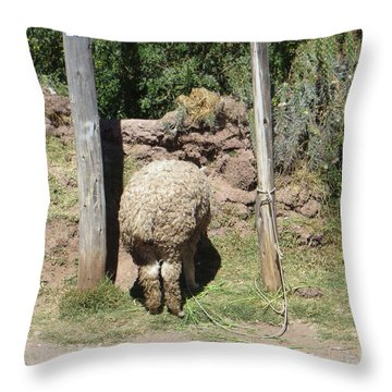 The Bashful Llama Throw Pillow
