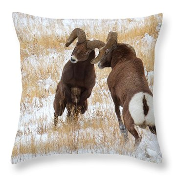The Battle For Dominance Throw Pillow by Jim Garrison