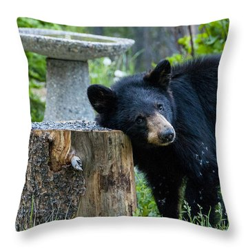 The Bear Cub With An Itch Throw Pillow