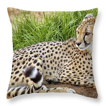 The Beautiful Cheetah Throw Pillow by Jason Politte