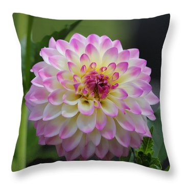 The Beautiful Dahlia Throw Pillow