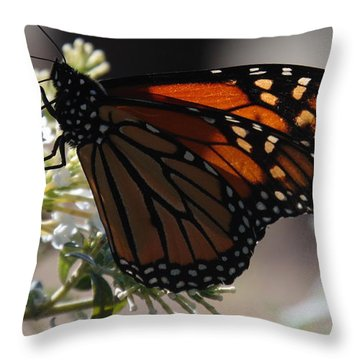The Beautiful Monarch Butterfly Throw Pillow by Charlotte Gray