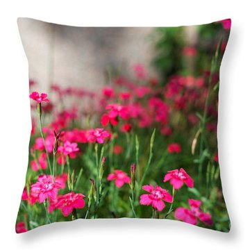 The Beauty Of Maiden Pinks Throw Pillow
