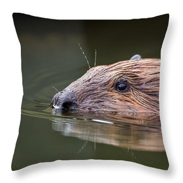 The Beaver Throw Pillow by Bill Wakeley