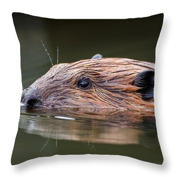 The Beaver Square Throw Pillow by Bill Wakeley