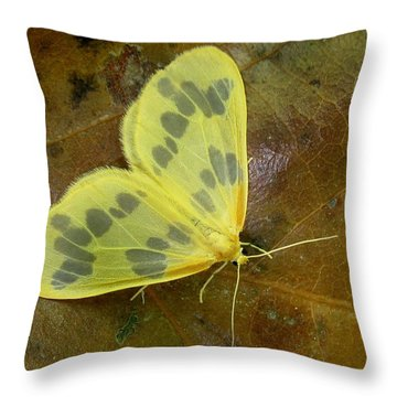 The Beggar Moth Throw Pillow by William Tanneberger